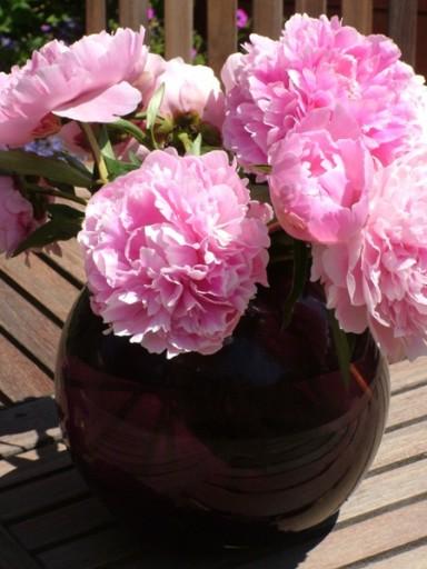 Peony Roses - Fiona Stolze
